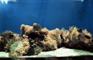 photo3_clownfish_tank_inside.jpg