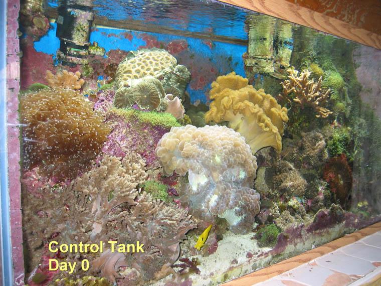 reefs.com