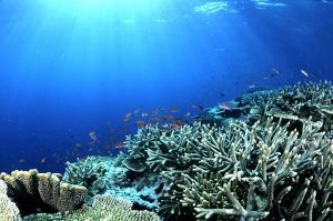 Coral_garden.jpg