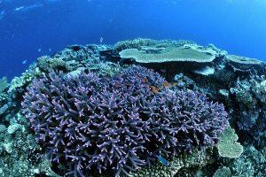 Fiji_reef.jpg