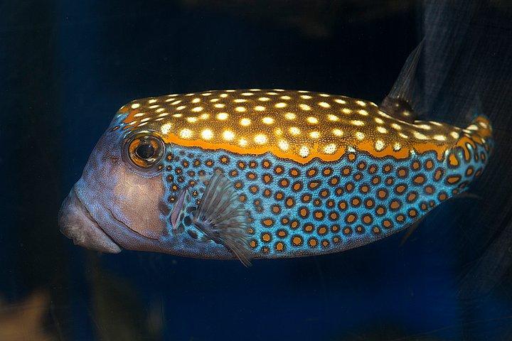 Toxic love boxfish for Loves fish box menu