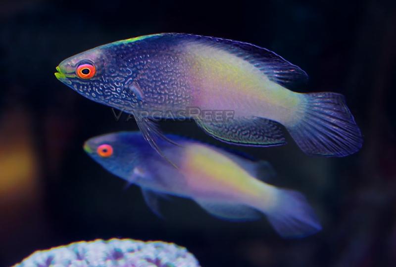 Forget the aquarium - 3 part 2