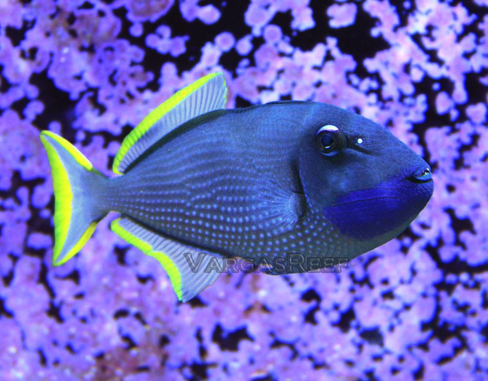 seth miller 180 reef reefscom