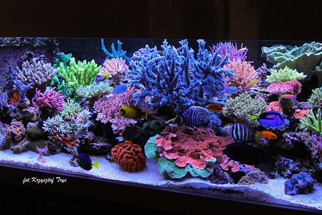 Best reefs from europe 2 krzysztof tryc tank for Best fish for reef tank
