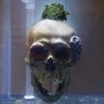 Corals In Art