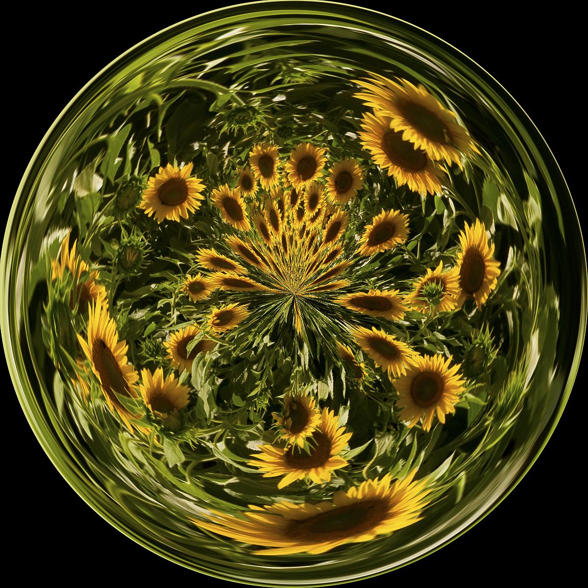 DSC_0936-circle