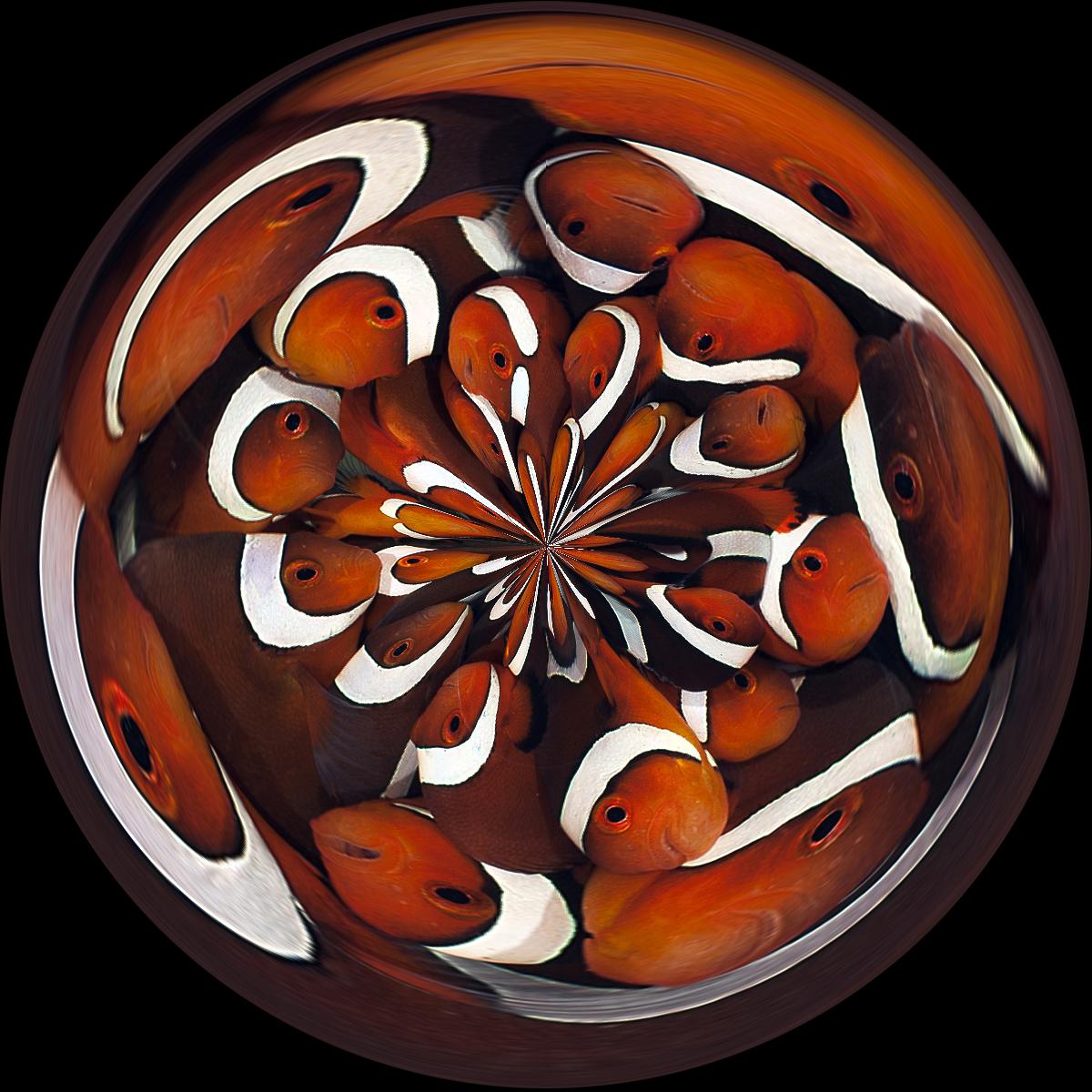DSC_1451-circle