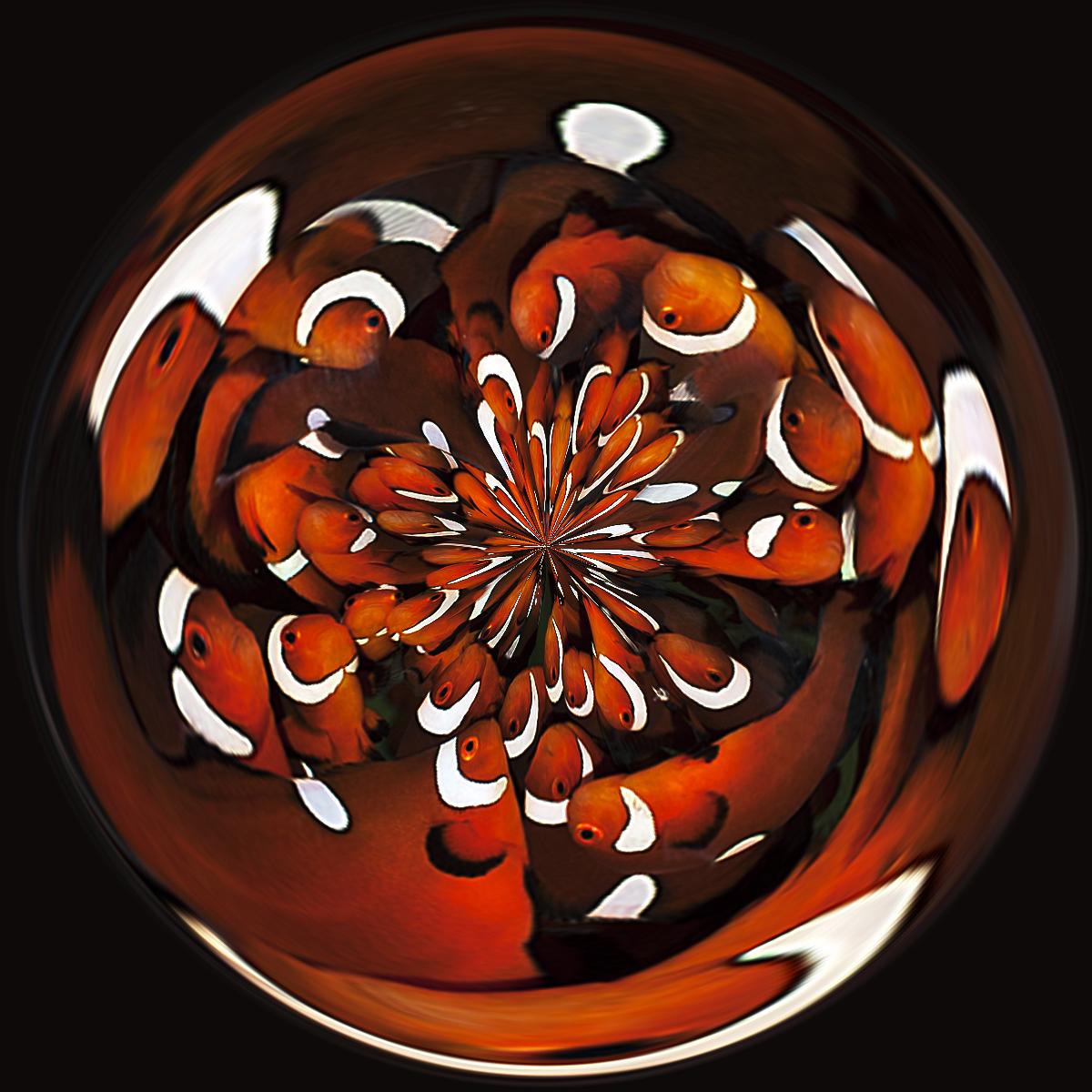 DSC_1477-circle
