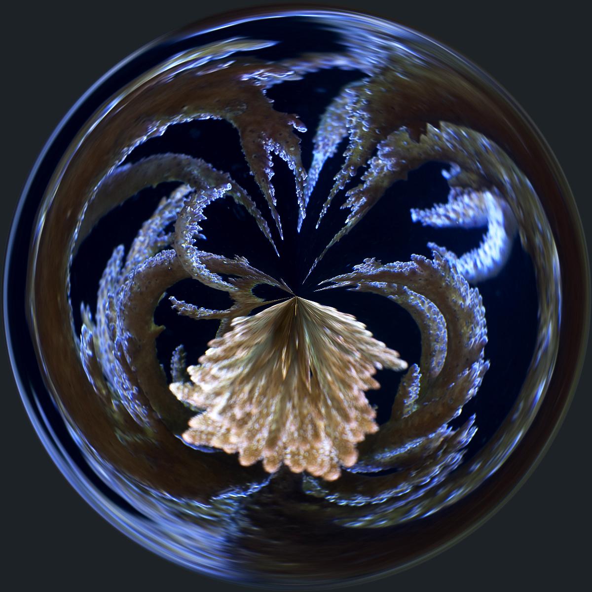 DSC_1755-circle