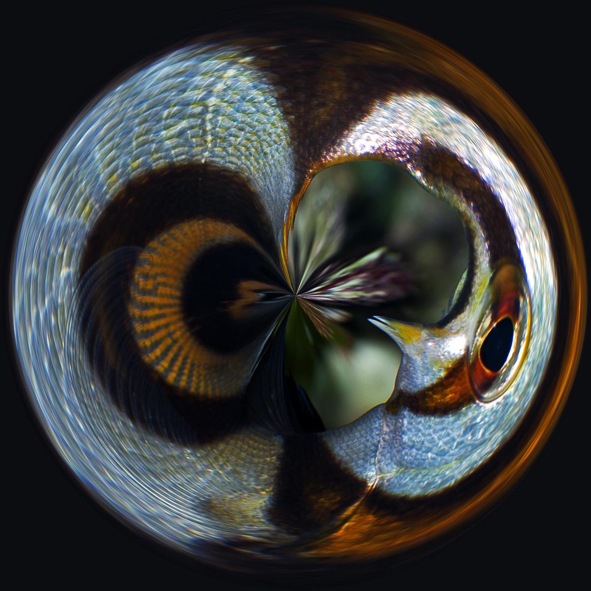 DSC_1787-circle