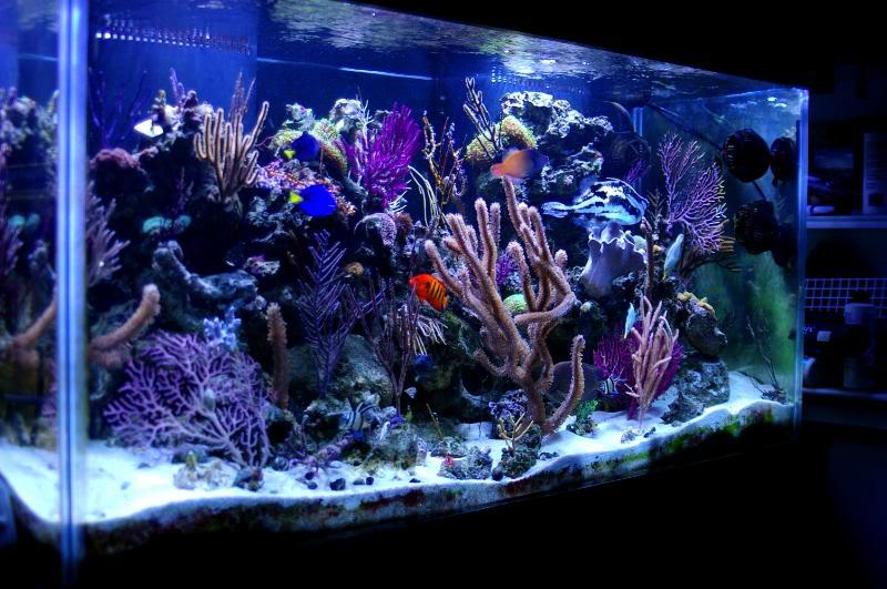 The Unappreciated Uv Sterilizer Reefs Com