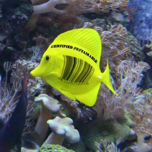 Ecolabelling and the Marine Aquarium Trade