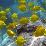 Hawaiian legislature introduces two new anti-aquarium resolutions