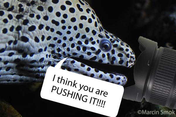 pushing-it - reefs