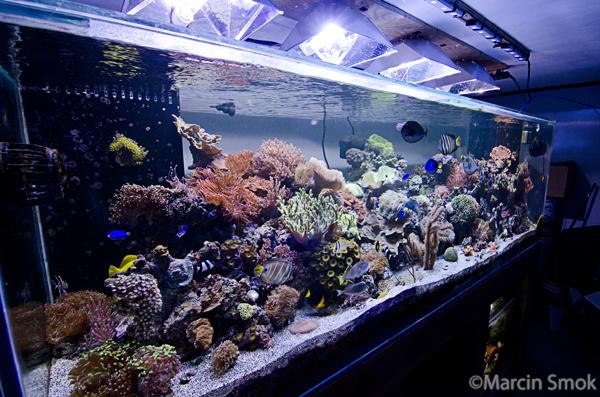 Wide Fish Tank : Aquarium Photography Guide Part IV: LENSES - Reefs.com