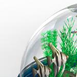 Thinking Outside the Box – Bio Bubble
