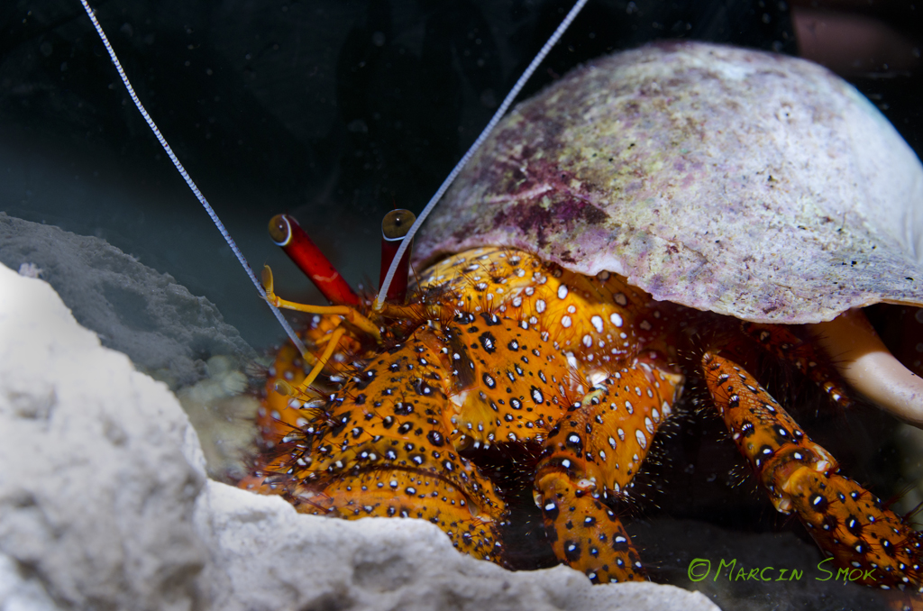 Photographing beauty of the underwater world