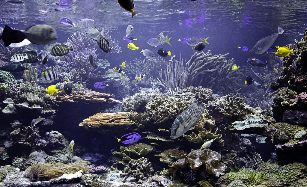 Visiting Public Aquariums In Us Long Island Aquarium