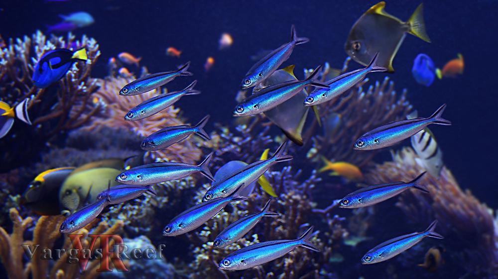 Long Island Aquarium Nerac