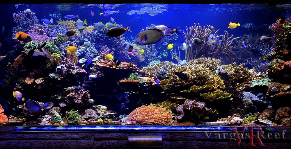 Long island aquarium nerac for Spring water for fish tank