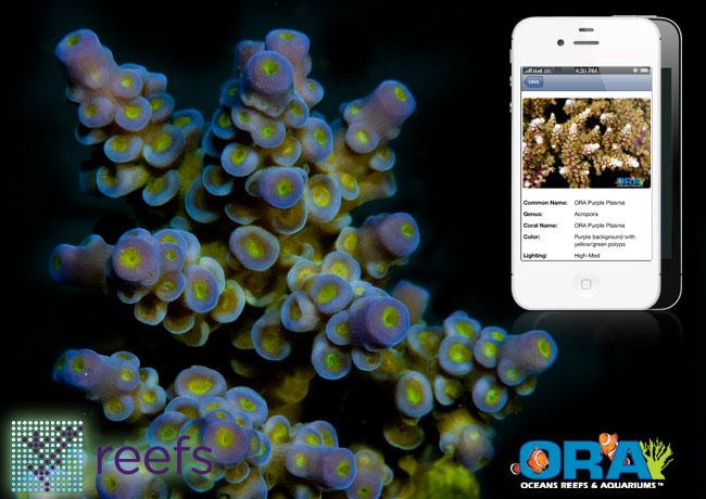 Ora Coral Identification Guide Now In Reefs App Reefs Com