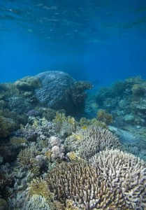 new species continue to be found on reefs