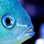 How to take picture of our aquarium: photography course part II – The Pictures