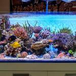 Andrea's Negusanti Italian Marine Aquarium