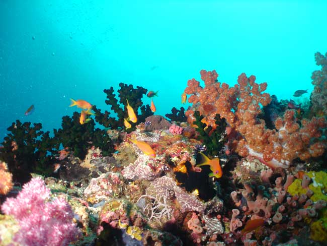 ghuli-thilla---corals-and-anthias