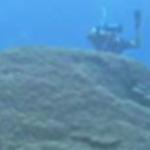 Protecting American Samoa's island of giants