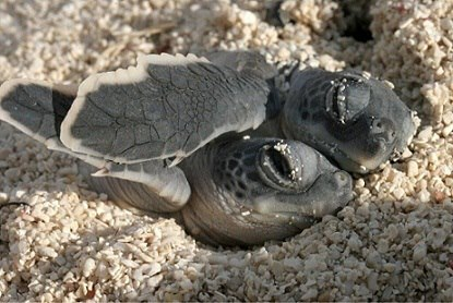cuteturtleszz