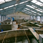Marine Ornamental Aquaculture Industry Taking Off In Tamil Nadu