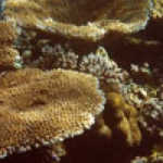 Global Reef Expedition: Canopies of Coral