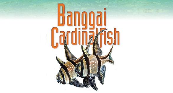 Banggai-Cardinalfish-Logo-Web-Feature