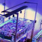 Virtual Tour of the New Aqua Medic Live Wholesale Facility