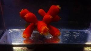 reefs.comLPNPC3