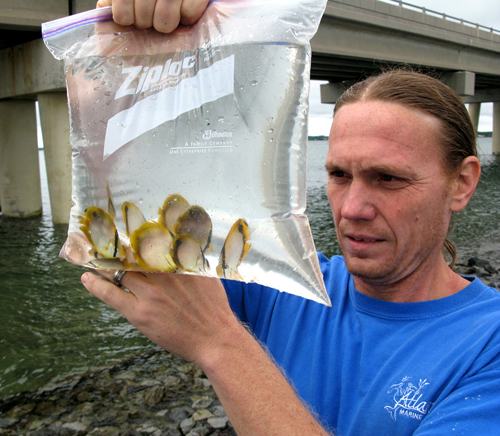 The author with a bag of large, late-season spotfin butterflyfish