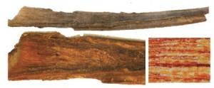 Blue-whale-earplug-or-ear-wax Source Trumble et al 2013