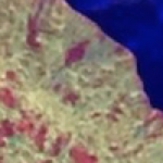 Jawbreaker Mushroom Coral Reportedly Has Four Figure Price Tag
