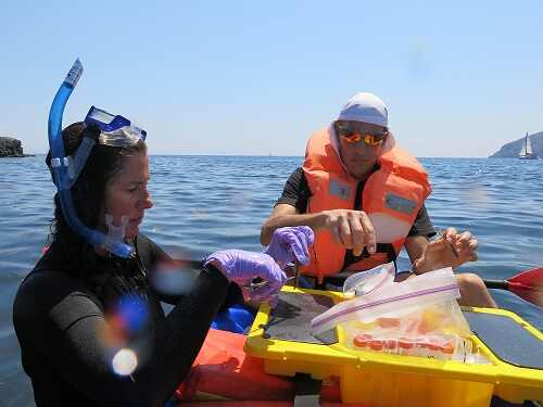 Dr. Kim Ritchie of Mote Marine Laboratory and Dr. Maoz Fine of the The Interuniversity Institute of Marine Sciences, Eilat, Israel handle biological samples.