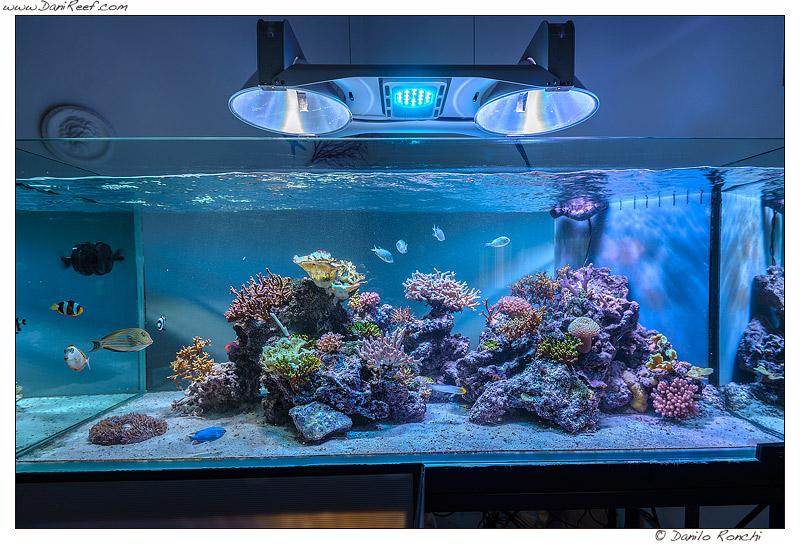 acquario marino completo vendo acquario juwel lt con