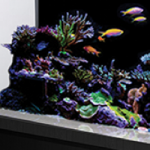 Innovative Marine NUVO SR Series Brings Beauty and Function to Large All-in-One Aquariums