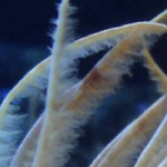 Cell Phone Photography for Corals and Inverts Getting Easier and Easier with Improving Technology