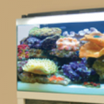 Win an awesome Reef Aquarium or deluxe Freshwater Aquarium set from Fluval worth up to $1500! Plus 10 runner-ups will win a 25 gal Accent Aquarium and Stand
