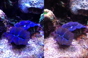 clams before and after-2