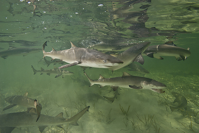 dnews-files-2013-12-sharks-660x440-jpg