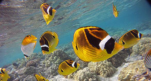 hawaii-fish-586px