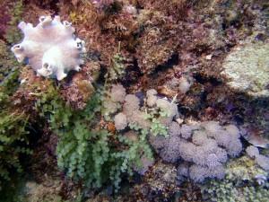 reefs.comCIN-AT-GBR2
