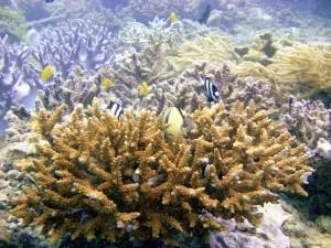 reefs.comCIN-AT-GBR3