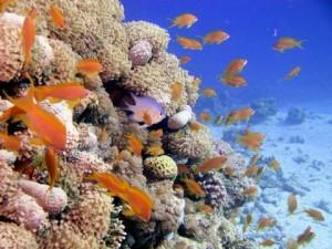 reefs.comCIN-AT-GOA